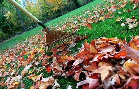 OUR LEAF RAKING CREW CLEANING UP YARD DEBRIS